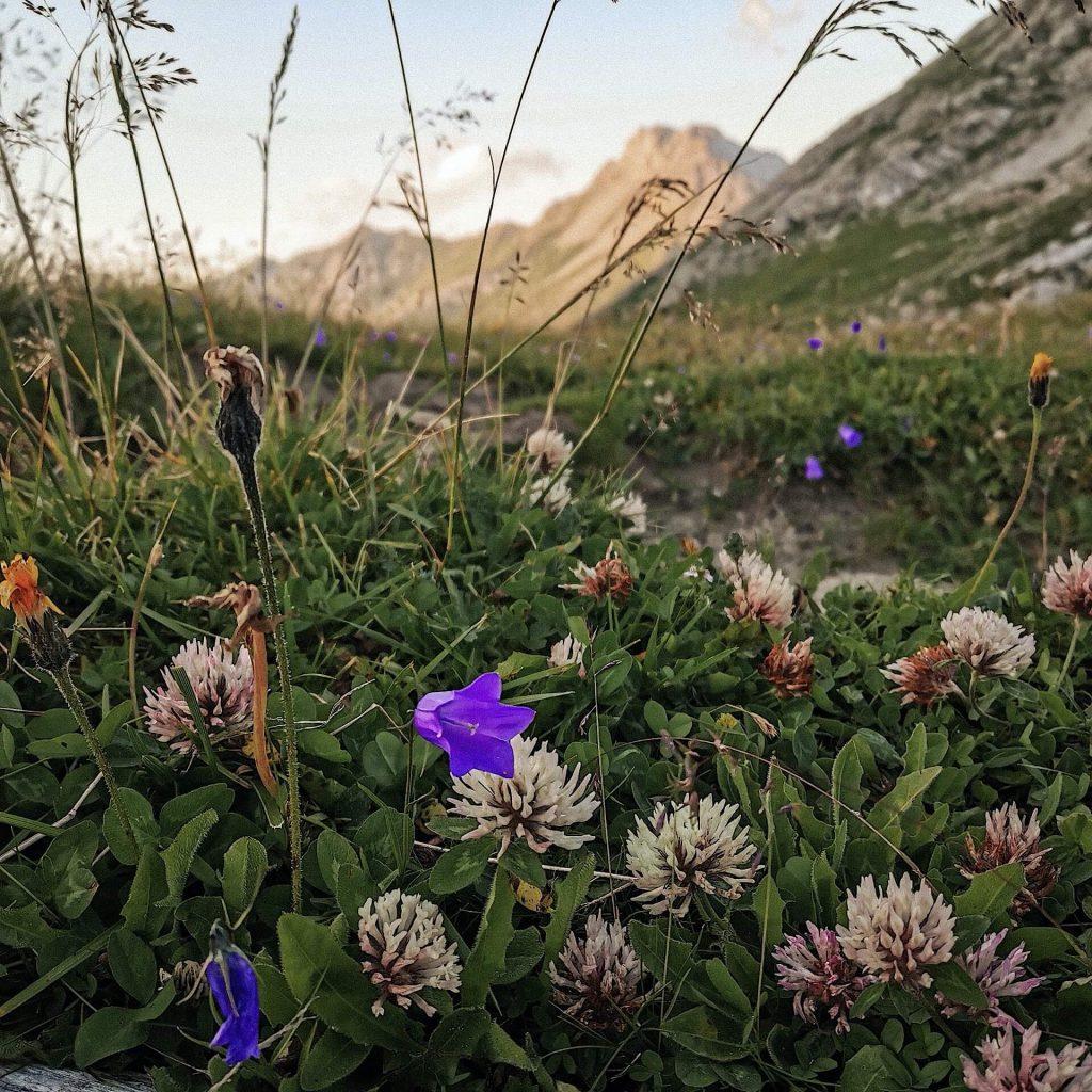 Klee und andere Wildblumen