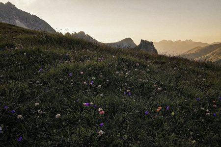 Wiese mit Klee und anderen Wildblumen